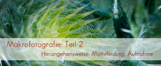 Makrofotografie: Teil 2 &#8211; Herangehensweise, Motivfindung, Aufnahme