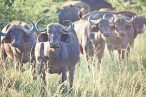 Südafrika-Blog (15 von 25)
