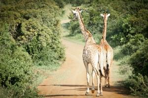 Südafrika-Blog (16 von 25)