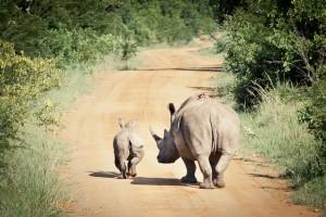 Südafrika-Blog (17 von 25)