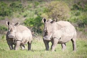 Südafrika-Blog (18 von 25)