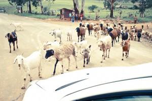 Südafrika-Blog (8 von 25)